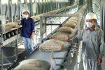 رشد  ۱۱۳ درصدی تولید سیمان در سال ۱۳۹۹